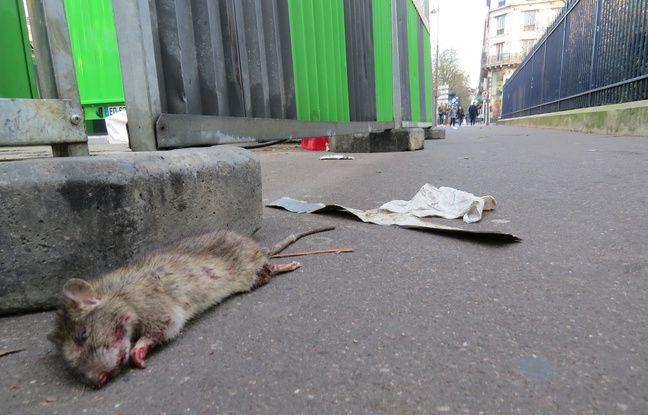 À BON CHAT BON RAT        648x415