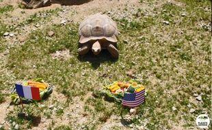Ariane, la tortue pronostiqueuse de Planète sauvage.