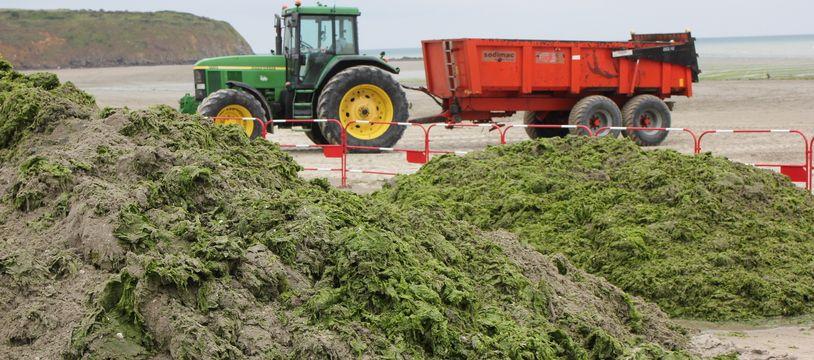Un tracteur ramasse les algues vertes sur la plage de la Grandville, à Hillion, ici en juin 2021.