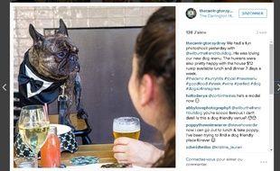 Un restaurant australien accueille les chiens comme les autres clients.