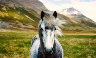 Illustration d'un poney.