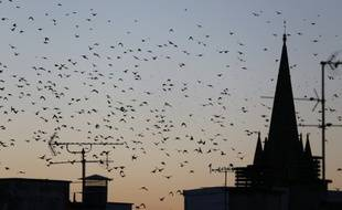 Illustration: Des oiseaux volent près d'une église le 8 octobre 2015.