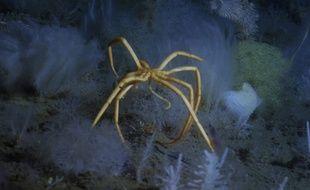 Les créatures improbables des abysses - Le Rewind