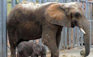 L'incendie s'est déclaré à promité du bâtiment qui abrite les éléphants, au zoo de Peaugres en Ardèche (illustration)