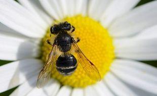 Fini de butiner l'abeille, les Balkans ont besoin de toi !