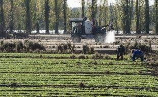Des ouvriers dans un champ de mâche, le 24 octobre 2018 à Saint-Julien-de-Concelles (Loire-Atlantique).