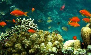 Des poissons nagent au milieu des récifs dans la mer rouge, à 30 km au nord de Djeddah (Arabie Saoudite), le 2 juin 2008