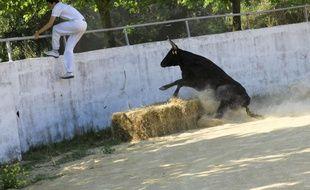 La course camarguaise représente plus de 200 clubs et 200 élevages.