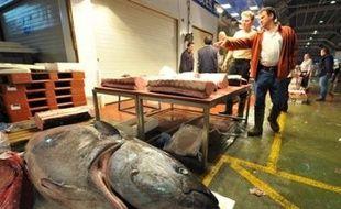 La Commission européenne a décidé vendredi de fermer prématurément la pêche au thon rouge en Méditerranée au nom de la protection de l'espèce, provoquant des protestations des pays concernés et la colère d'une profession déjà à cran à cause du renchérissement du carburant.