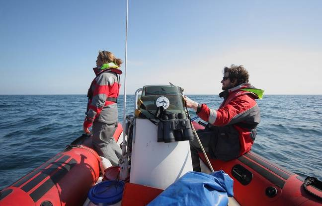 L'équipe d'Apecs au large des Glénan pour tenter d'identifier des requins pèlerins.