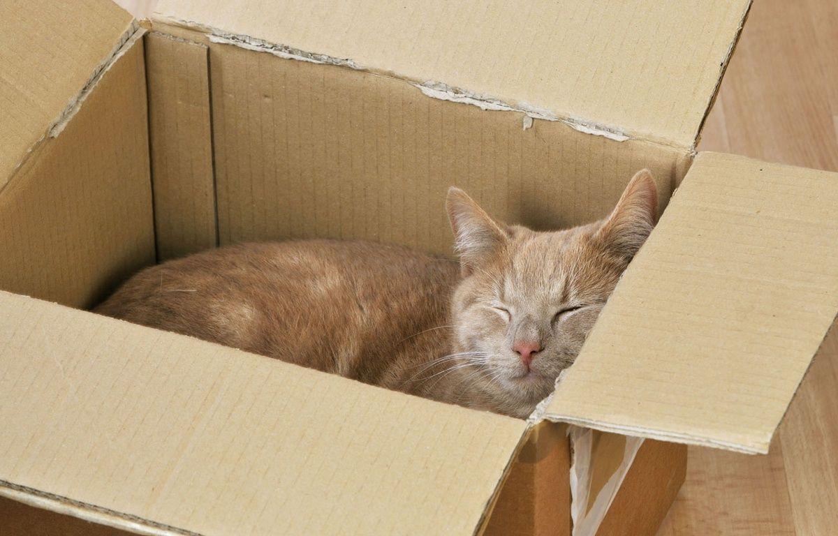 Une chatte a survécu 8 jours coincée dans un colis postal. – ARDEA/M.VANS/SIPA