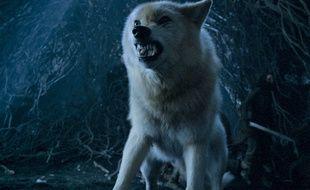 Le loup Eté veille son maître Bran Stark dans la saison 6 de Game of Thrones