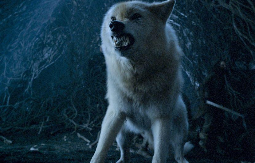 Games Of Thrones A Quoi Servent Les Loups Enfin Ceux Qui