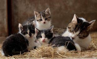 Des chats (illustration)