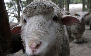 Un mouton.