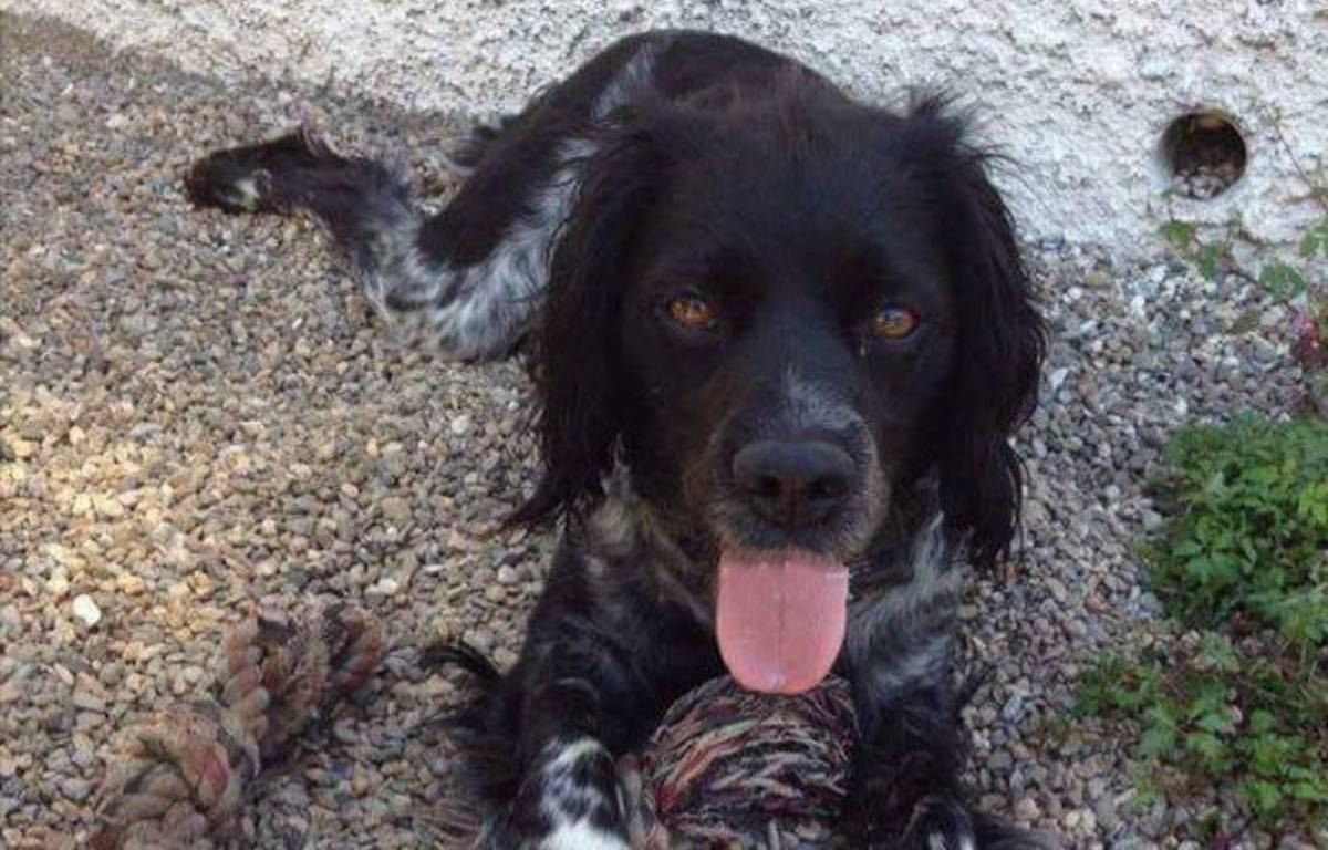 Les Internautes recherchent Féria, la petite chienne qui avait conduit les secours jusqu'au cadavre de son maître – DR