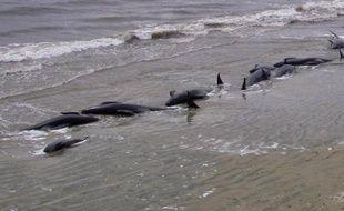 Huit baleines-pilotes échouées sur une plage isolée de Nouvelle-Zélande vont être euthanasiées, ont indiqué jeudi les autorités, après plusieurs vaines tentatives de les repousser vers le large.