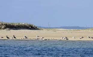 Photo de cormarans, de pluviers et de goelans posés sur le sable du banc d'Arguin, à marée haute.