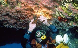 Illustration d'un plongeur en train de récolter du corail.