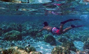Le centre de plongée tente de lutter contre la pêche à la bombe, interdite