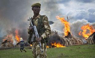 Un soldat kényan surveille la combustion d'ivoire braconné.
