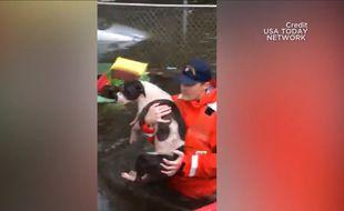 Des secouristes sauvent des chiens victimes de l'ouragan Florence