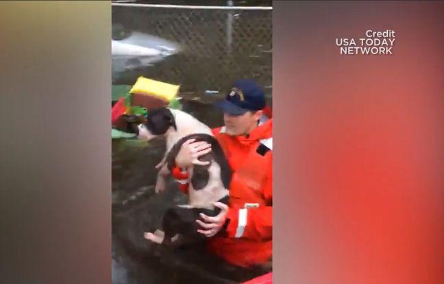 VIDEO. Des secouristes sauvent des chiens victimes de l'ouragan Florence