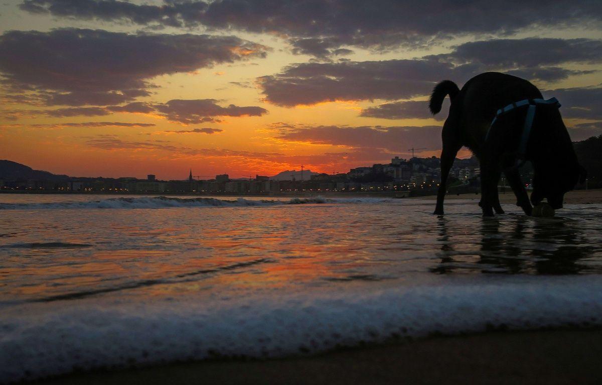 Le bien-être physique et mental des chiens est la priorité des dresseurs de la CIA. – Javier Etxezarreta/EFE/SIPA