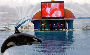 Marineland, le delphinarium d'Antibes, possède six orques aujourd'hui. Dont cinq ont vu le jour en captivité.