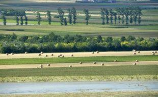 La mise sur le marché des pesticides et phytosanitaires change de mains et dépendra désormais de l'Agence de sécurité sanitaire, et non plus du ministère de l'Agriculture