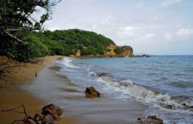 Une plage en Martinique. Illustration