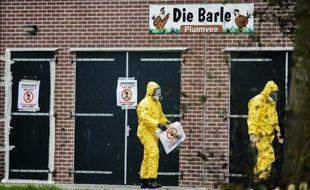 Des membres des services de santé dans une ferme de volailles où a été détecté le virus de la grippe aviaire à Zoeterwoude, près de La Haye, le 30 novembre 2014