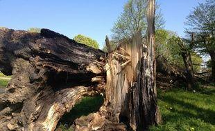 C'est un arbre qui s'est brisé avant de tomber sur une voiture en circulation en Lorraine. Illustration