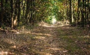Le trail était prévu sur des chemins de Meurthe-et-Moselle, mais il ne pourra se tenir en l'absence d'un accord avec une association de chasse de ne pas tirer ce matin-là. Illustration