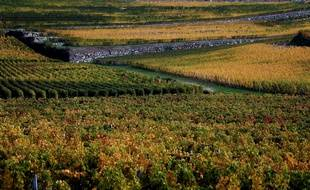 Illustration de vignes dans l'appellation Saint-Emilion. (AP Photo/Bob Edme)/NYOTK/27539556849/1510301031