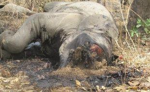 """""""Plus de 500 éléphants"""" ont été abattus dans le parc national de Bouba Ndjidda (nord du Cameroun) depuis janvier par des braconniers soudanais et tchadiens, a affirmé dimanche à l'AFP le gestionnaire du centre touristique de cette réserve, contestant les chiffres des autorités."""