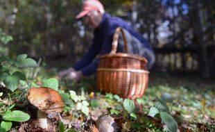 Un chercheur de champignons (illustration)