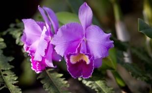 Le 21 fevrier 2013. Les grandes serres du jardin des Plantes de Paris accueille l'exposition - Mille et une orchidees - du 22 fevrier au 18 mars. A cette occasion, plus de 1000 pieds d'orchidees en fleur sont presentes dans la serre.  // PHOTO : V. WARTNER / 20 MINUTES