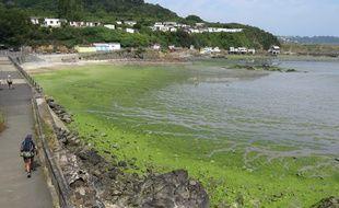 La plage du Valais à Saint-Brieuc, fermée en raison des algues vertes, le 17 juillet 2019.