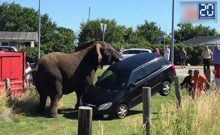 Des éléphants refusent de retourner travailler au cirque - Le Rewind (vidéo)