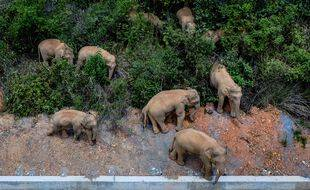 Les autorités chinoises, équipées de drones, surveille un troupeau d'éléphant, partis de leur réserve, qui traversent le pays.