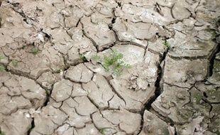 Le département du Nord placé en vigilance sécheresse.