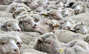 Deux foyers de fièvre catarrhale ovine (FCO), ou maladie de la langue bleue, ont été détectés récemment en Saône-et-Loire et deux autres ont été relevés dans la Nièvre
