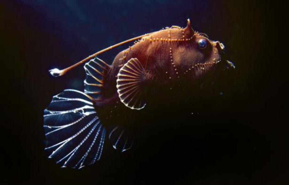 L'enseigne Casino ne commercialisera plus en 2014 de poissons issus de la pêche profonde, un type de pêche contesté par les écologistes pour leur impact sur les océans, a annoncé lundi l'ONG Bloom sur la foi d'un courrier du groupe de distribution. – Justin Marshall Queensland Brain Institute