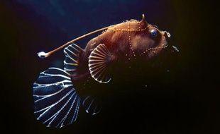 L'enseigne Casino ne commercialisera plus en 2014 de poissons issus de la pêche profonde, un type de pêche contesté par les écologistes pour leur impact sur les océans, a annoncé lundi l'ONG Bloom sur la foi d'un courrier du groupe de distribution.