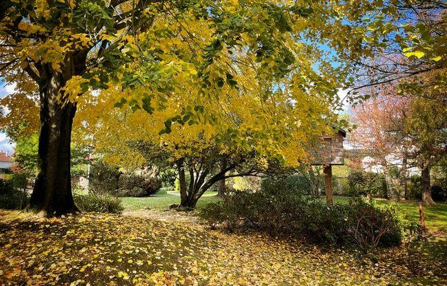 Les couleurs d'automne bien restituées par l'iPhone 12 Pro d'Apple.