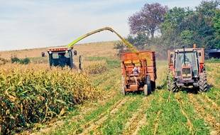 Ensilage de maïs (illustration).