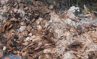 La mairie de Rions a déposé plainte après la découverte de carcasses de sangliers en bord de Garonne