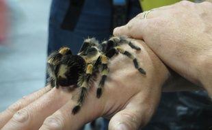 Une mygale vivante, des scorpions, veuves noires, méduses ou poissons vénimeux feront partie de l'exposition Venenum.