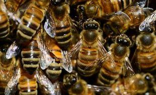Des abeilles (Illustration.